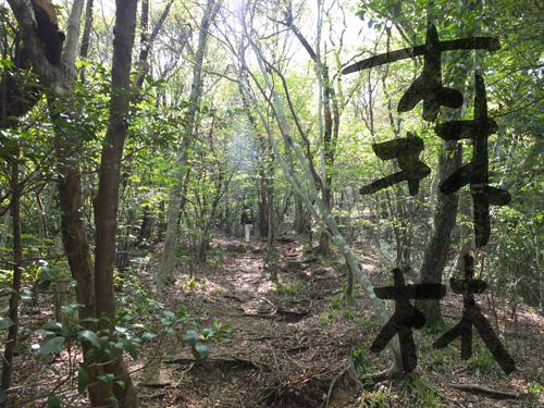 森林写真加工