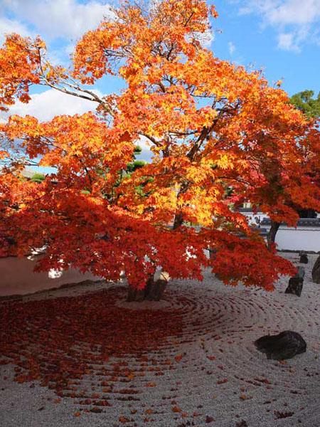 光明禅寺の紅葉2