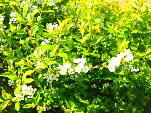 庭の草花1