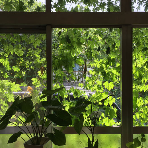 緑のカーテン